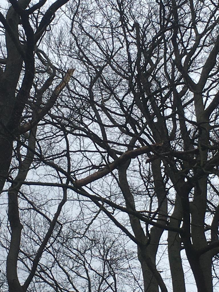 Droht zu Fallen Baum